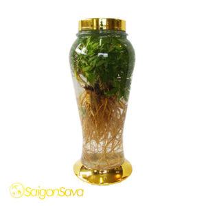 Bình thủy tinh ngâm rượu Hàn Quốc (BTT-HQ026)