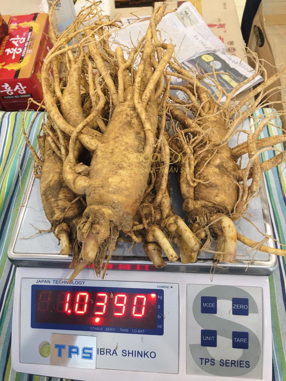 nhân sâm tươi hàn quốc loại 4 củ 1kg tại saigonsava