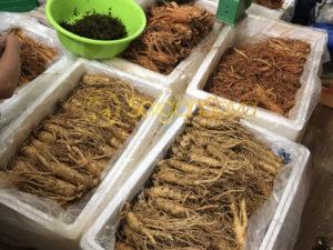 Nhân sâm được nhập khẩu từ saigonsava