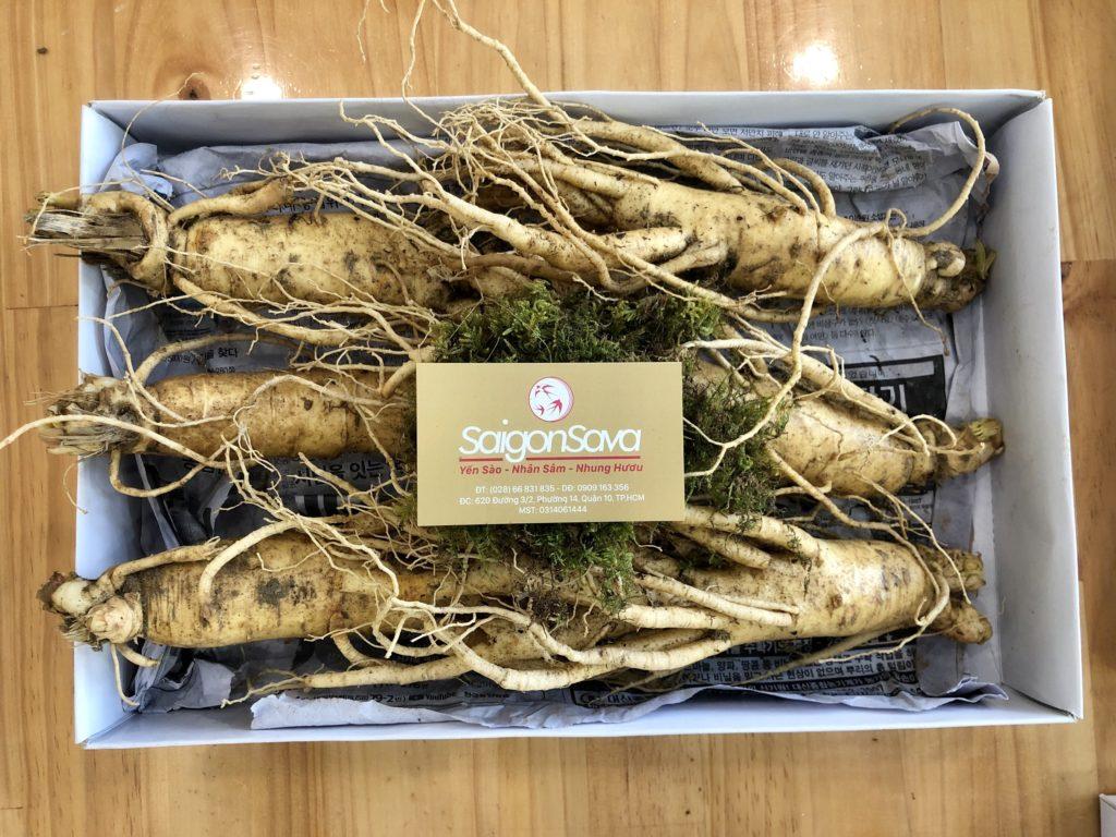 nhân sâm tươi Hàn Quốc loại 6 củ tại saigonsava
