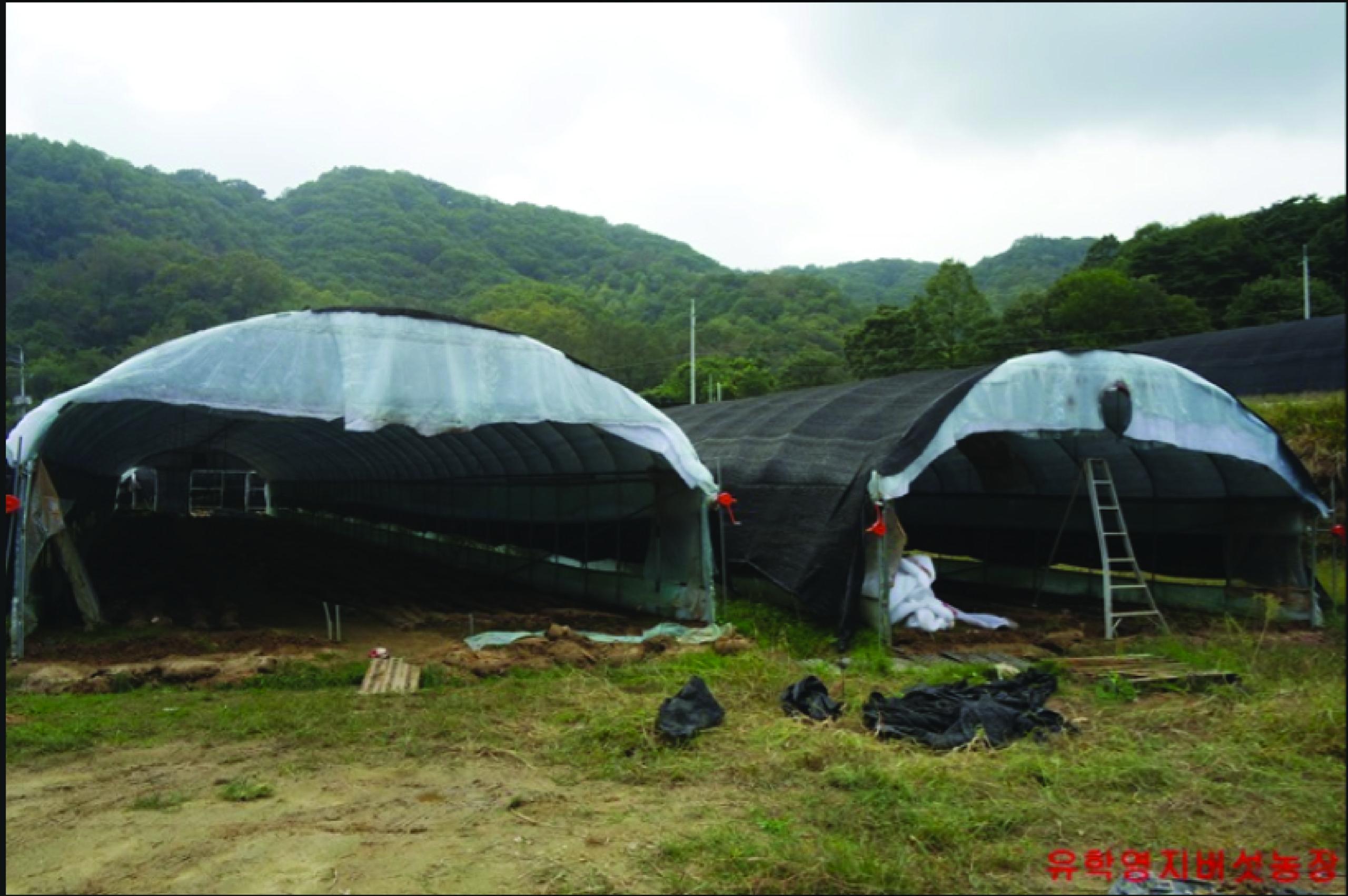 trang trại nấm hàn quốc