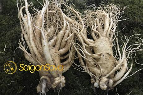 Saigonsava-đơn vị chuyên cunhg những sản phẩm về sâm chất lượng tốt nhất