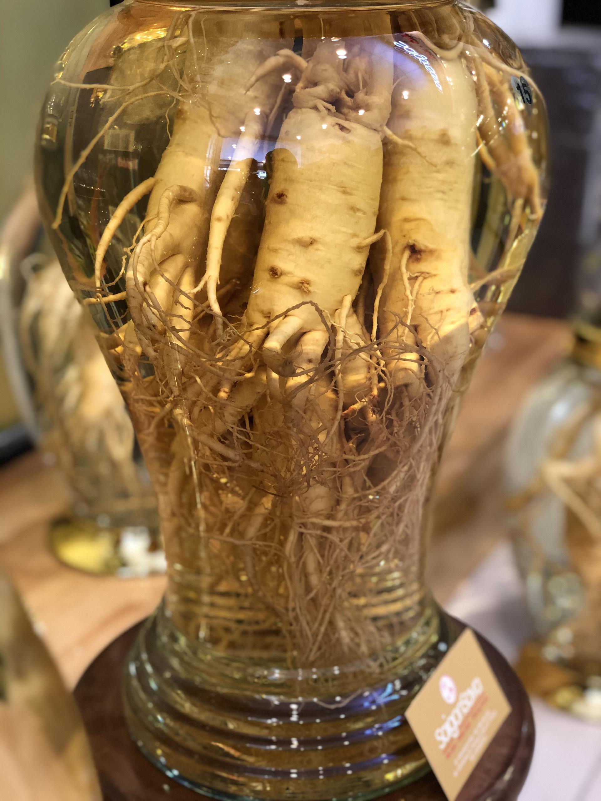 bình rượu sâm 13 lít sâm tươu 5 củ kg
