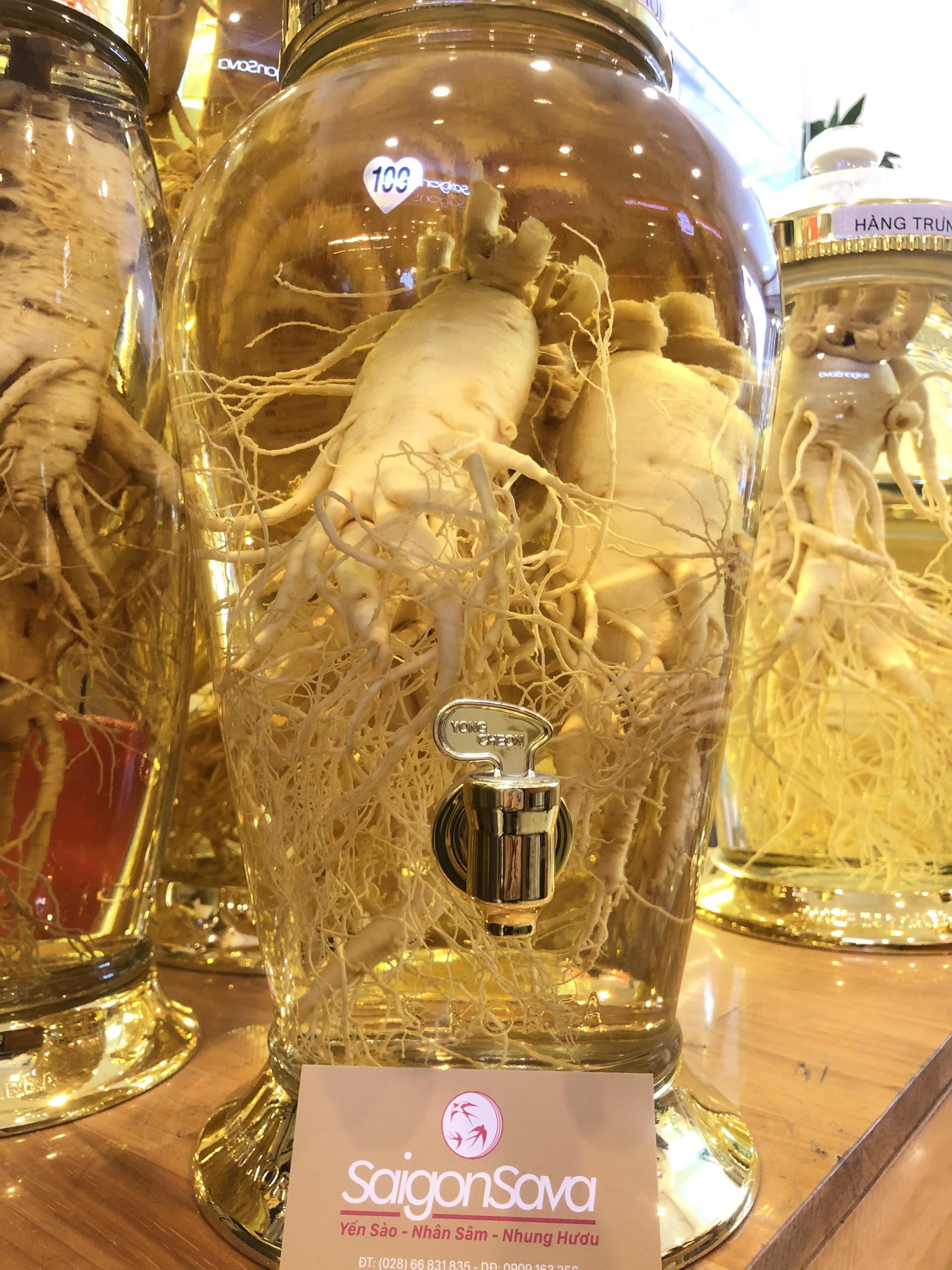 bình rượu sâm 5.5 lít