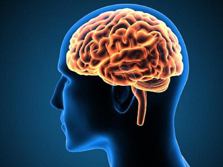 Yến sào giúp bổ não, cải thiện các triệu chứng bệnh về thần kinh