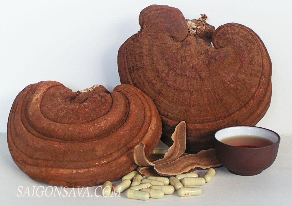 Nấm linh chi được biết đến với thành phần đầy đủ dưỡng chất cho nhiều công dụng tốt sức khoẻ